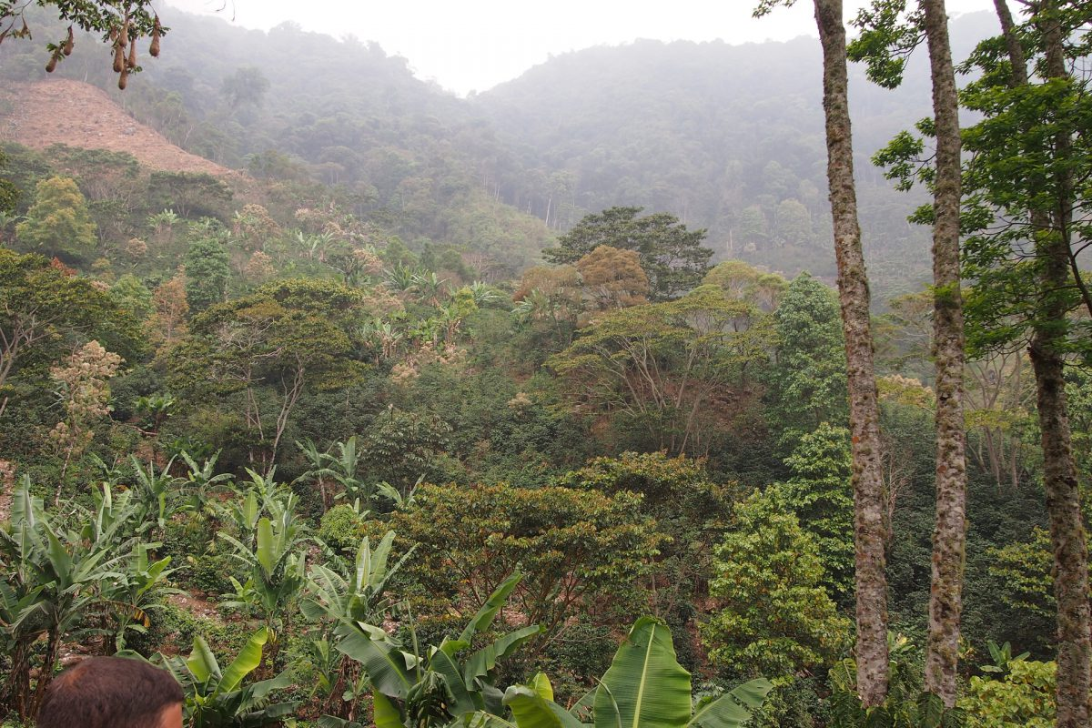 The woods in Honduras