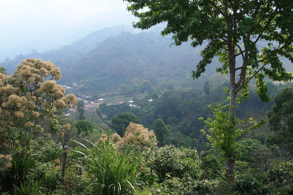 Landscape of Honduras, where the Coffee beginns